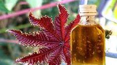 Касторовое масло - это ключ к вашей красоте. Это косметическое масло просто обязано стоять у вас на полочке, рядом с другой косметикой.