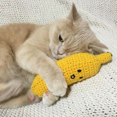 grafika cat, banana, and animal