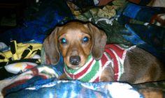 She's pretty much the cutest wiener ever!