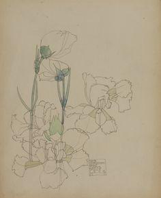 Charles Rennie Mackintosh, White Carnation, St Mary's, Scilly, 1904
