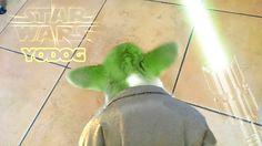 Master Yodog the famous Corgi Jedi of Budapest