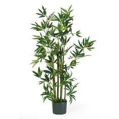 "Price: $49.99 History has shown that bamboo plants have inspired many of us over time and many live times. We have grown this 4' bamboo silk plant that contains nine stalks and 540 leaves, pre arranged in a black plastic pot. You may display it by itself, or combine it with our other silk bamboo plants and trees to create a virtual indoor bamboo garden. No matter what, it will be eye catching! Measures 48""H x 29""W x 29""D."