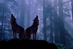 """An old Cherokee once told his grandson, """"My son, there is a battle between two wolves inside us all.  One is Evil.  It is anger, jealousy, greed, resentment, inferiority, lies, & ego.  The other is Good.  It is joy, peace, love, hope, humility, kindness, empathy, & truth.""""  The boy thought about it and asked, """"Grandfather, which wolf wins?""""  The old man quietly replied, """"The one you feed."""""""