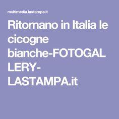 Ritornano  in Italia le cicogne bianche-FOTOGALLERY- LASTAMPA.it