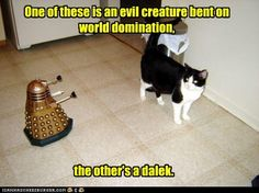 funny pictures - Domination