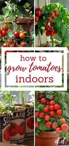 Indoor Gardening Gr