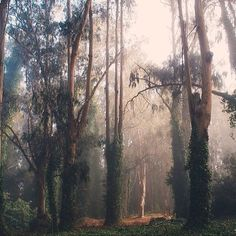 Image via We Heart It #art #background #beautiful #dark #Dream #dreamy #fog #foggy #forest #grunge #hipster #landscape #light #love #morning #nature #pastel #photography #sunlight #travel #trees #vintage #wallpaper #wanderlust #weheartit #wish #woods #darknature #instagram