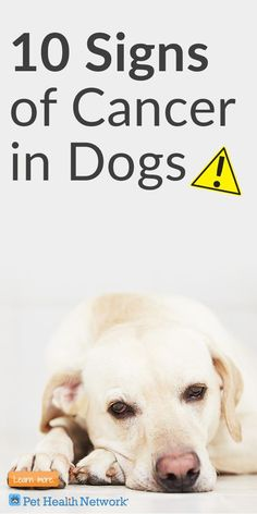 10 signs of cancer in dogs that pet parents should watch for