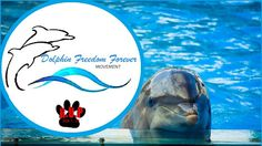 Barack Obama: Dolphins Freedom Forever Movement: The Ban on Dolphin Captivity