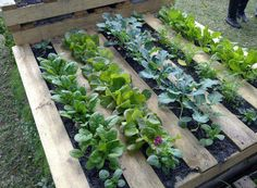 raised bed wooden pallet garden! #MyVeganJournal