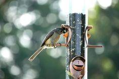 Bird Feeder Fruit & Seeds | eHow.com
