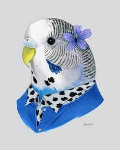 Parakeet animal print  Budgie art print  by berkleyillustration