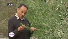 LCP Assemblée nationale | Portrait de Pierre Rabhi, amoureux de la nature et fervent défenseur de l'agro-écologie