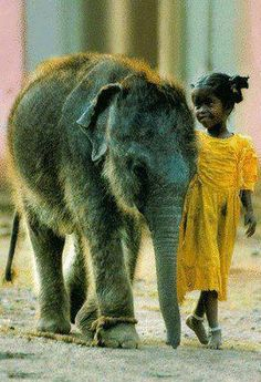 i want to pet an elephant baby