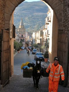 Donkey collecting rubbish in streets of Castelbuono, Sicily.