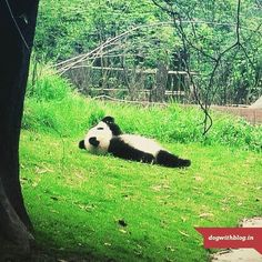 Sometimes I just want to be a Panda...