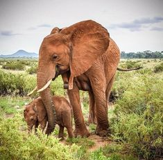 Mother elephant & baby