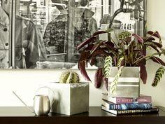 Betonkübel mit Silber-Optik für Pflanzen lassen sich ganz schnell und einfach kreieren. Eine genaue Anleitung findet ihr auf Pflanzenfreude.de #pflanze #plant #diy# planters #plants #pflanzen #pflanzenfreude