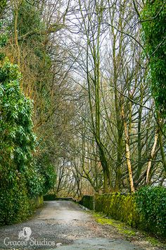 There are so many picturesque pathways in the English countryside. This was taken on a hike on a very cold, snowy day in England.  The Path ~ photography by Gracee Studios