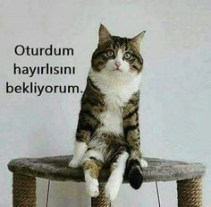 hayırlısıylan :) Funny Tweets, Funny Memes, Funny Cats, Funny Animals, Teamwork Quotes, Funny Jokes For Adults, Funny Quotes About Life, Funny Cat Pictures, Work Humor