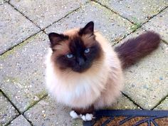 Kat zit buiten voor de deur, ze wil naar binnen. Wacht jouw kat ook altijd netjes?