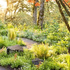 This woodland setting, in shades of yellow-green and white, rely on foliage  plants such as lady ferns, sweet woodruff, Brunnera, and Lenten rose to provide the primary visual interest. While a large boulder, strategically  placed along the gently curved path, offers not only visual interest but also a place to sit and enjoy the delights of this shade garden...