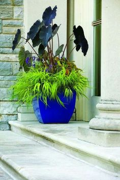 beautiful colors in this planter the boston fern is a. Black Bedroom Furniture Sets. Home Design Ideas