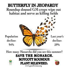 Monarch in danger of extinction ..This is sad to read because I can remember in my childhood I saw an actual Monarch butterfly migration as they came through my state of Kansas and they were resting feeding on all our flowers my grand parents had planted in our yard. It was a wonderful memory and I'd love for my grand daughter to get the chance to experience the same wonderful day when the sky and yards all around me were filled with fluttering Monarch Butterflies on their life cycle…