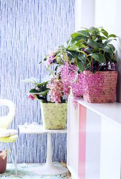 Groen wonen | Tropische planten. Met het vakantieseizoen voor de deur bieden tropische planten alvast een voorproefje op het zomerse gevoel. En met de juiste verzorging bloeien ze tot diep in de nazomer, zodat je er ook dan nog van kunt genieten. Wat alle drie deze schoonheden gemeen hebben, is hun bijzondere kleur. Deze varieert van zacht en vlammend rozerood tot geel, oranje en roze. De bladeren mogen er ook zijn: van diepgroen en golvend tot pijpenkrullen en fiere lancetten. Het meest…