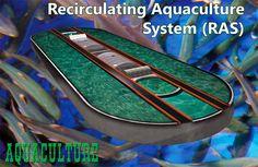 Recirculating Aquaculture Systems | Check out my personal Aquaponics project at www.davaoaquaponics.com