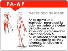 Cadena Muscular Postero-Anterior