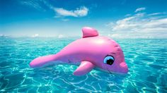 aaaaaaaaaahhhhhhhhh pink dolphin! those things are real and try to drown people!