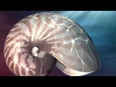 ▶ Nature by Numbers (The Fibonacci Sequence) - YouTube