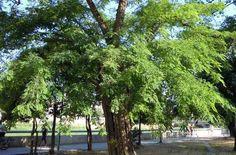 Andres Pedrero: Falta mucha voluntad política para proteger los árboles