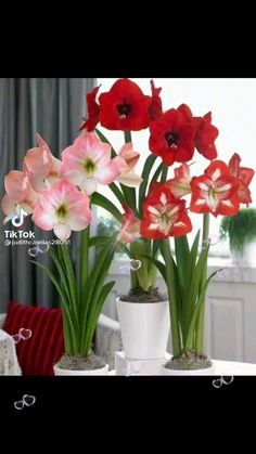 Table Decorations, Plants, Furniture, Home Decor, Lights, Flowers, Decoration Home, Room Decor, Home Furnishings