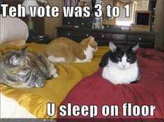 Teh vote was 3 to 1. U sleep on floor.