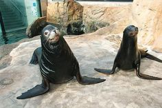 Long Beach Aquarium Of The Pacific Southern California/Baja Gallery http://www.aquariumofpacific.org/exhibits/southern_california_baja_gallery/
