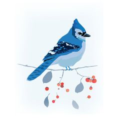 Blue Jay Bird on Cotoneaster Branch This is a Limited Edition print. The Original is from a water colour and acrylic painting created in the Studio of Paloma Le Sage. Free Shipping Australia Wide Available in two sizes 21cm wide x 15cm high A5 29cm wide and 21cm high A4 Printed on professional quality linen textured card and ready to frame. All Prints are on high quality A4 200gsm- Beautiful Linen card stock using professional inks.   Your print will be shipped to you in a protective cello…