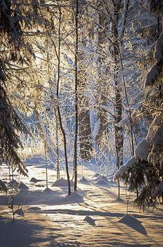 Beautiful World Day winter sunlight Winter Szenen, I Love Winter, Winter Magic, Winter Time, Winter Christmas, Prim Christmas, I Love Snow, Snowy Day, Snow Scenes