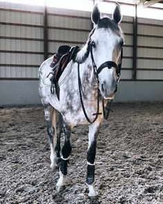 """5,393 Likes, 34 Comments - stephanie prince (@stephanieprinceee) on Instagram: """"i've had a lot of requests so i'm working on a youtube video that will explain more about my horses…"""""""