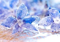 How to Crystallize a Real Flower is part of Diy crystals - Here's how to crystallize a real flower to make a beautiful decoration All you need are simple household ingredients Alum Crystals, Borax Crystals, Diy Crystals, Black Crystals, Sugar Crystals, Diy Crystal Growing, Growing Crystals, Grow Your Own Crystals, How To Make Crystals