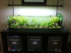 "Jake's Mr. Aqua 12gal Long/36"" Shrimp Tank (pic heavy) - Page 12"
