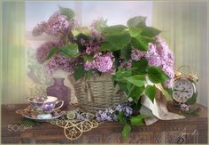 The flowering time of lilac by Luiza  Gelts -            Луиза  Гельтс on 500px
