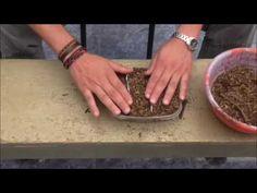 COMO SEMBRAR DALIAS DESDE SEMILLA (germinal bowl) - YouTube
