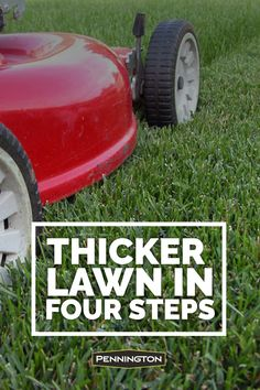 Here are the simple secrets behind a thicker, lusher lawn that looks great to the eye and feels great under bare feet.