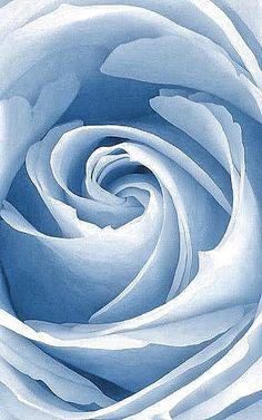 Frivolous Fabulous - Baby Blue Roses Just for You Baby Blue Aesthetic, Light Blue Aesthetic, Beautiful Roses, Blue Flowers, Beautiful Flowers, Blue Dream, Love Blue, Photo Bleu, Foto Macro