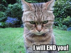 angry cat hillarious animals with funny faces Funny Cats, Funny Animals, Cute Animals, Grumpy Cats, Angry Animals, Angry Birds, Crazy Cat Lady, Crazy Cats, Angry Cat
