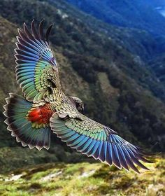 10 Beautiful and Colorful Birds Pretty Birds, Beautiful Birds, Animals Beautiful, Nature Animals, Animals And Pets, Cute Animals, Exotic Birds, Colorful Birds, Bird Pictures