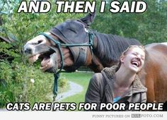 "Cats are pets for poor people - Funny horse and a girl are laughing: ""And then I said cats are pets for poor people!"""