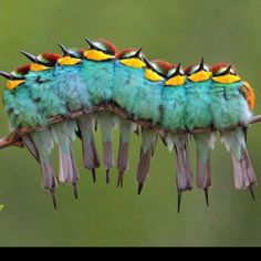 I thought this was a catapillar at first, lol!!!
